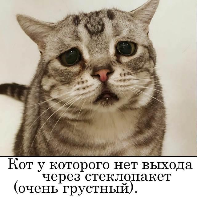 выход для кота через стекло